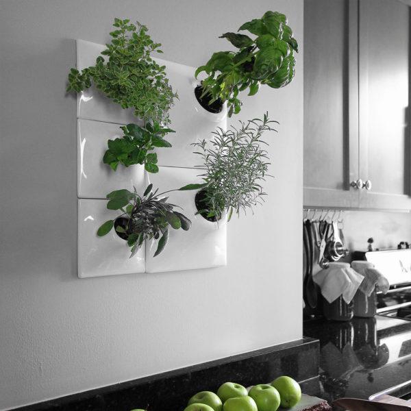 modern indoor herb wall