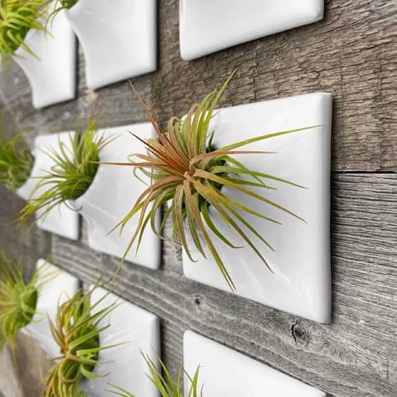 white ceramic wallscape planters for air plants